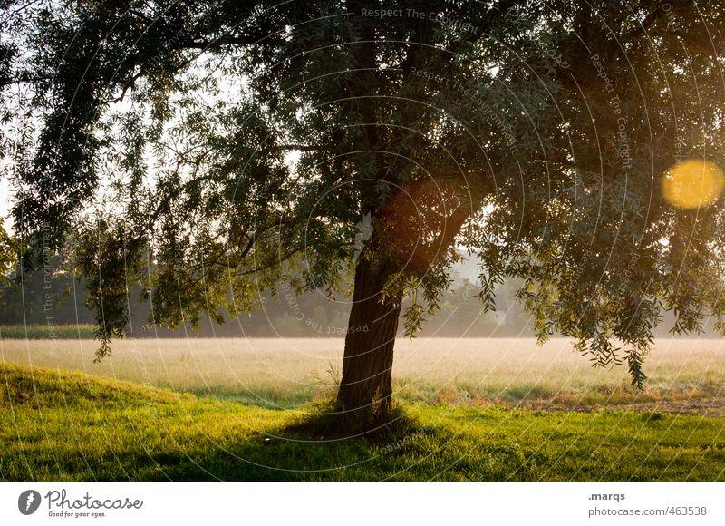 Licht Natur schön Sommer Baum Landschaft Blatt Umwelt Leben Wiese Gesundheit Stimmung Park Klima leuchten Wachstum Schönes Wetter