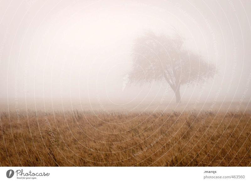 Oktober Ausflug Umwelt Natur Landschaft Himmel Herbst Wetter Nebel Baum Feld kalt schön Leben Wandel & Veränderung Romantik schemenhaft Farbfoto Außenaufnahme