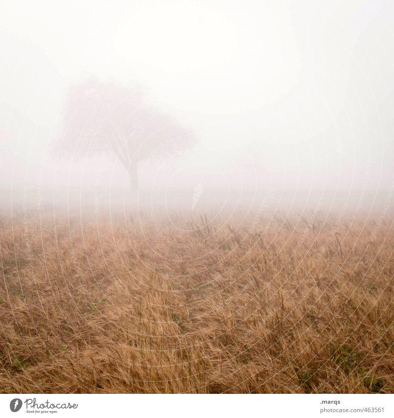 Unklar Umwelt Natur Landschaft Horizont Herbst Klima Nebel Baum Feld ästhetisch frisch kalt Gefühle schemenhaft hell Farbfoto Außenaufnahme Menschenleer