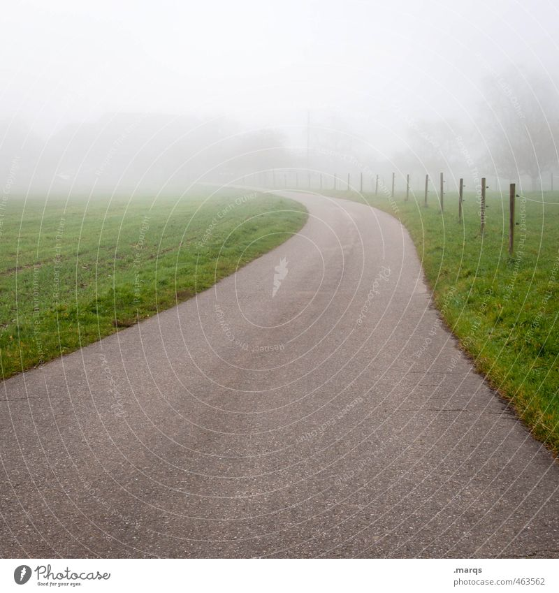 Into Ausflug Umwelt Natur Landschaft Herbst schlechtes Wetter Nebel Baum Verkehr Straße Wege & Pfade einfach Zukunft ungewiss orientierungslos Farbfoto