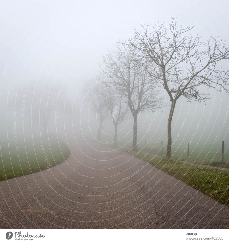 Loss Ausflug Umwelt Natur Landschaft Herbst schlechtes Wetter Nebel Baum Verkehr Straße Wege & Pfade einfach Zukunft ungewiss Orientierung kahl Farbfoto