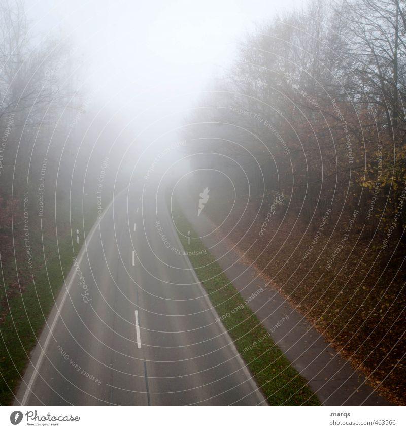 Auf und davon Natur Pflanze Landschaft kalt Umwelt Straße Herbst Wege & Pfade Stimmung Nebel Verkehr Perspektive Zukunft fahren Straßenverkehr schlechtes Wetter