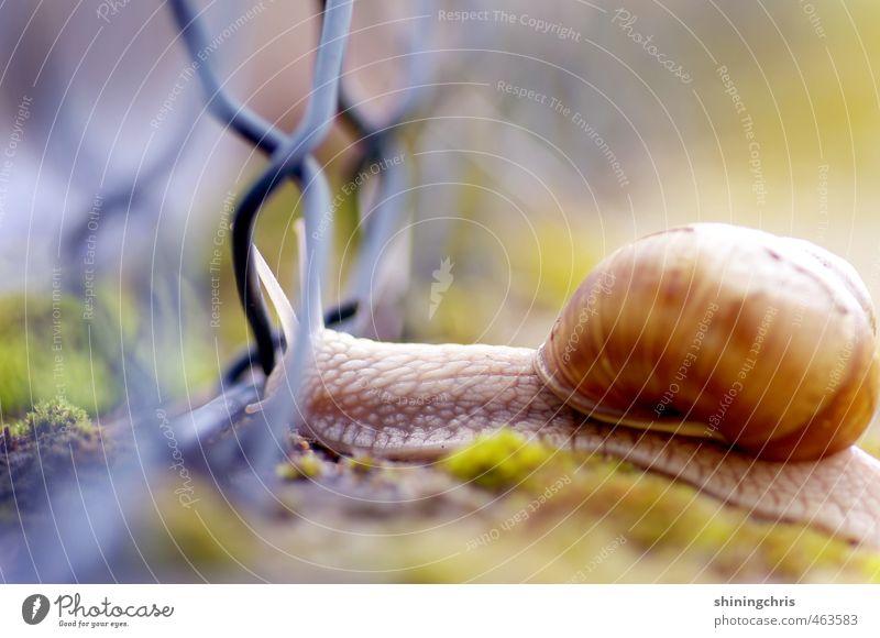 move on Herbst Moos Garten Tier Schnecke 1 Bewegung mehrfarbig krabbeln Zaun Überqueren Übergang Schneckenhaus Farbfoto Außenaufnahme Nahaufnahme