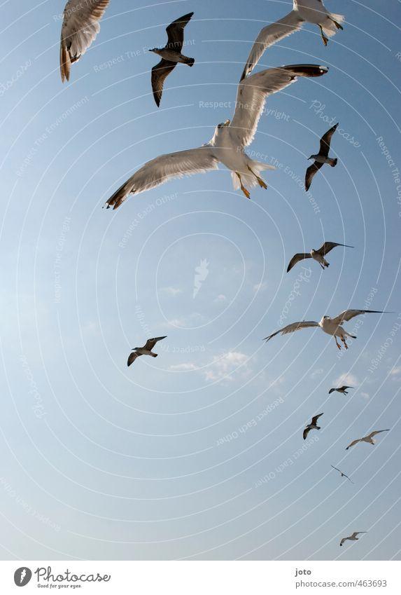 die vögel Himmel Sonne Sommer Vogel Möwe Tiergruppe Schwarm fliegen bedrohlich frech wild Aggression Leben Neugier Beute kreisen Jagd Landen Appetit & Hunger