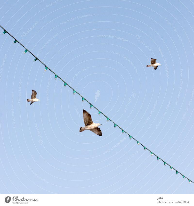 2+1 Wolkenloser Himmel Sommer Meer Schifffahrt Fähre Möwe 3 Tier Tiergruppe fliegen frei Unendlichkeit Zusammenhalt Lichterkette Ferien & Urlaub & Reisen Vogel