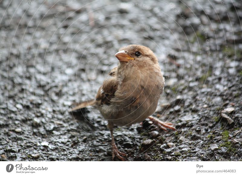 Vogelperspektive 1.0 Natur Erde Sand Tier Wildtier Tiergesicht Blick Spatz Feder Schnabel Schwache Tiefenschärfe drollig niedlich Stein feuchtkalt Farbfoto