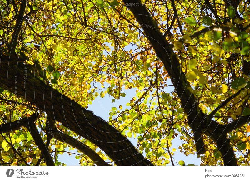 Herbst im Wald Baum Blatt Ast Natur Farbe Sonne