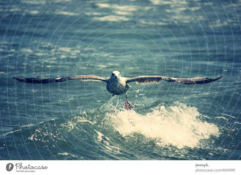 Tiefflug Natur Ferien & Urlaub & Reisen blau Wasser weiß Sommer Meer Erholung Tier Ferne Leben Freiheit Stimmung Luft Vogel fliegen