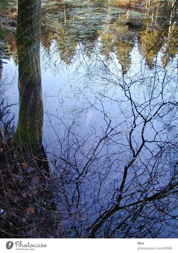 Zauberwald_1 überschwemmter Wald fantastische Spiegelung