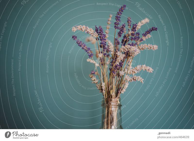 Lavendel blau Pflanze Blüte natürlich violett Flasche Vignettierung Zimmerpflanze Flaschenhals Gesteck