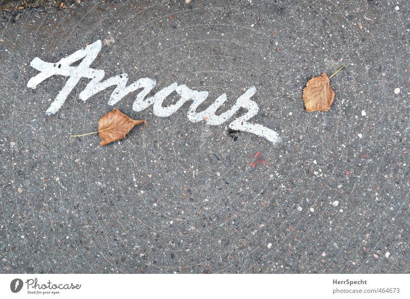 Liebe ist nur ein Wort Herbst Blatt Paris Schriftzeichen grau weiß Enttäuschung Einsamkeit Amour Vergänglichkeit Asphalt Hoffnung Liebeserklärung Liebesgruß