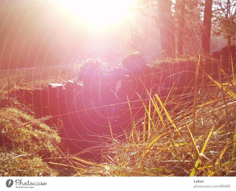 Gut getarnt ;-) Soldat Licht Gras Helm grell ducken Alarm Außenaufnahme liegen Morgen Bundeswehr Sonne hell hoch Wachsamkeit