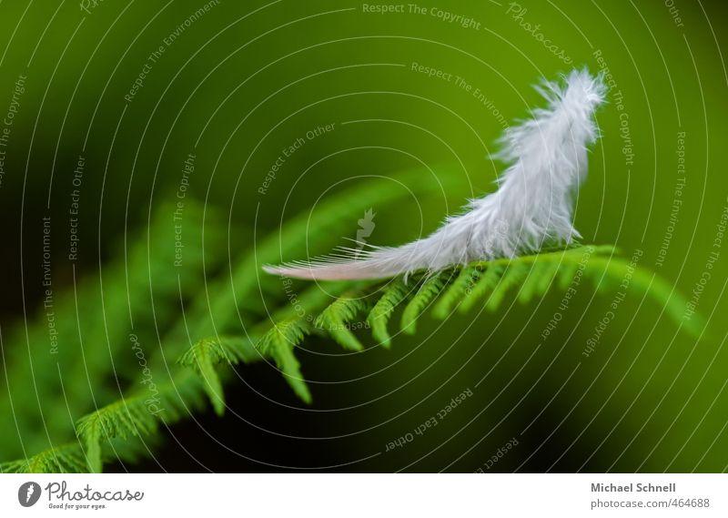 Federleichtes Pflanze Tier Grünpflanze Farn Waldrand Vogel grün weiß Leichtigkeit Vergänglichkeit flüchtig Farbfoto Außenaufnahme Tag Schwache Tiefenschärfe