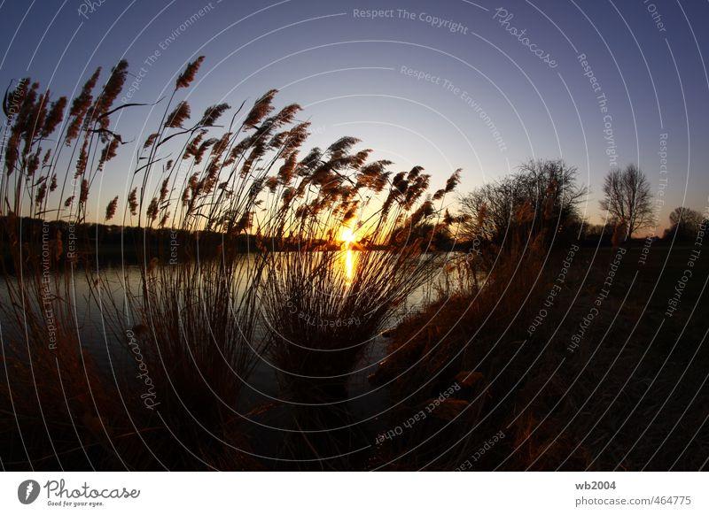 Sonnenuntergang Himmel Natur schön Wasser Landschaft Schönes Wetter Seeufer