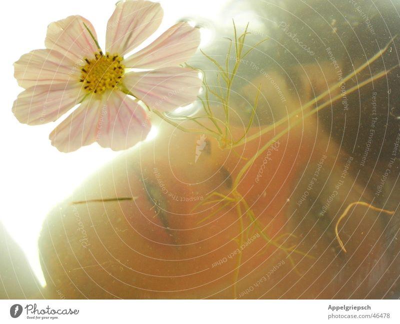 Traumversunken Mensch Wasser Himmel Blume Sommer Gesicht träumen maskulin Gedanke Spiegelbild Unterwasseraufnahme zeitlos Wasseroberfläche androgyn