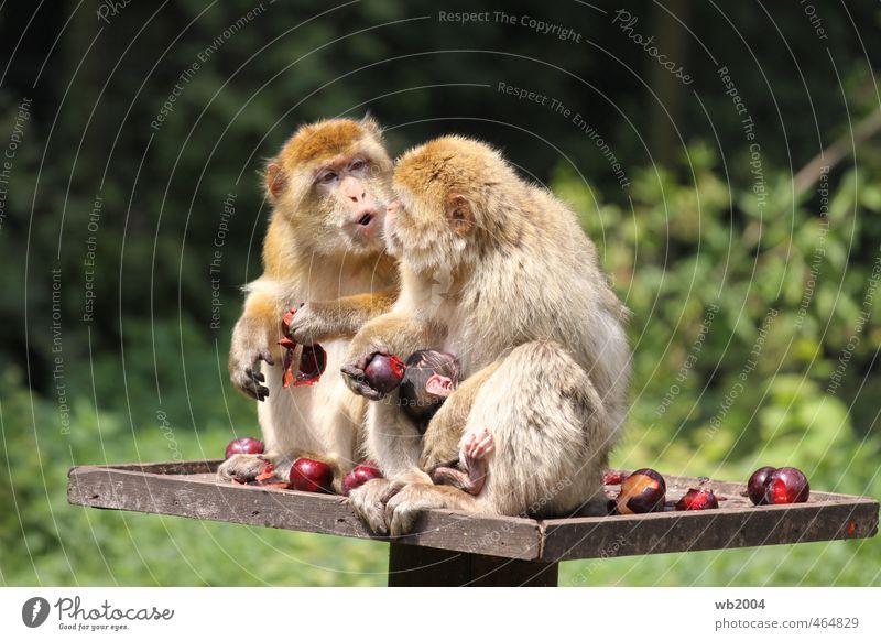 Frühstück Tier Tierjunges Essen Tierpaar Fell Zoo Fressen
