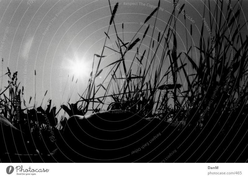 sommer 2k 4 (K.) Gras Natur Mensch Elbe