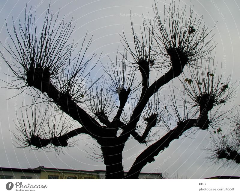 Äste Baum Winter dunkel