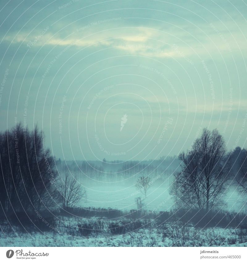 Nebelschwaden Natur Baum Landschaft Winter Umwelt Gras Wetter Feld Sträucher