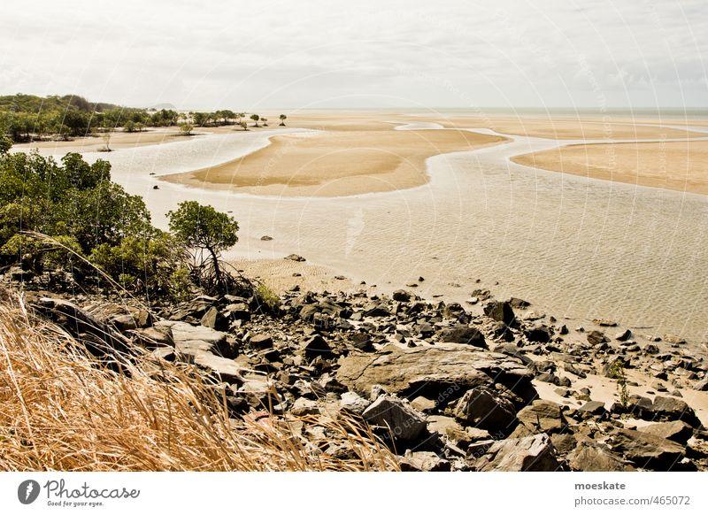 Mangroven am Strand Sand Wasser Himmel Wolken Sommer Baum Meer Pazifik Karibisches Meer Wärme Ferien & Urlaub & Reisen Ebbe Australien Stein Farbfoto