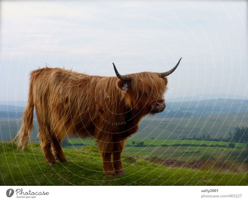 blickdicht Natur Sommer Einsamkeit Landschaft Tier Gras natürlich Haare & Frisuren Freiheit braun Kraft wandern stehen ästhetisch beobachten Hügel