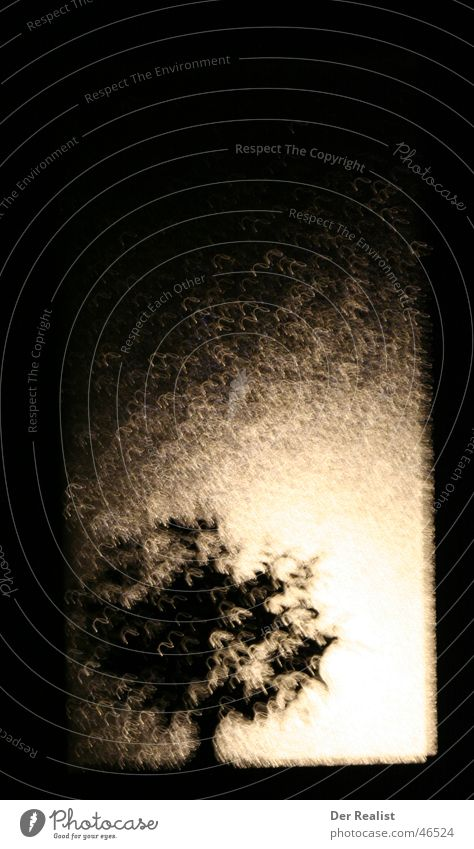 Gegenlicht 1 Baum dunkel Regen hell Sturm Laterne suspekt