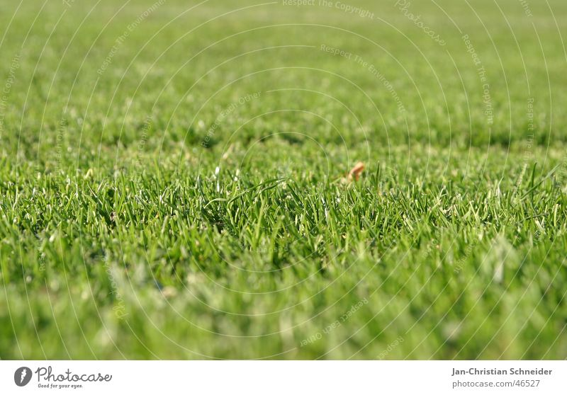 Rasen Fußballplatz grün Gras Feld