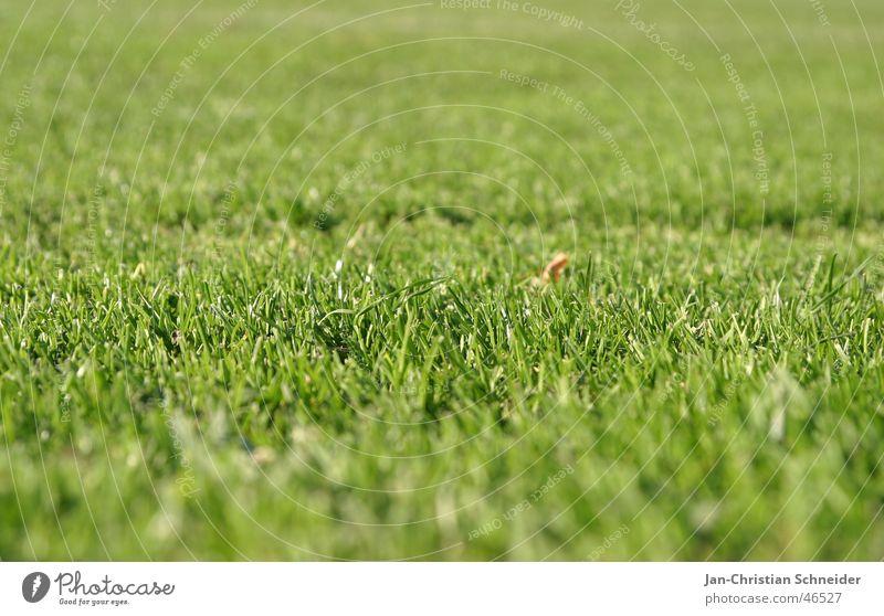 Rasen grün Gras Feld Fußballplatz