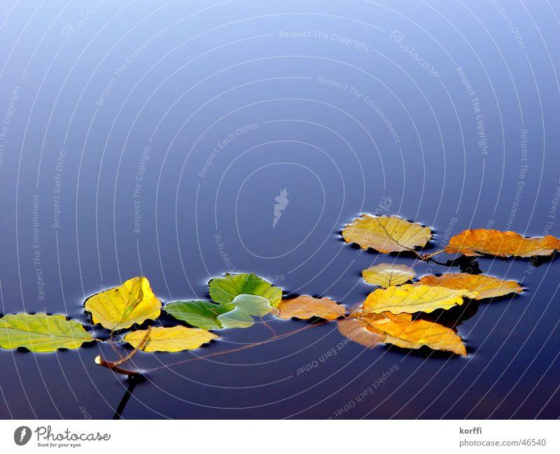 Silent Autumn ruhig Herbst Zweig