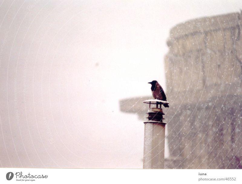 Rabenwetter Einsamkeit Winter schwarz kalt Wärme Schnee grau Denken Vogel oben Schneefall Nebel Denkmal Schornstein Wien Schneeflocke