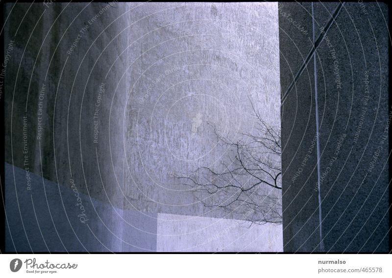 irgendwie Häusliches Leben Kunst Umwelt Baum Menschenleer Haus Mauer Wand Fassade dunkel eckig trashig Stadt Stimmung Angst Entsetzen kalt nackt Rätsel Ferne