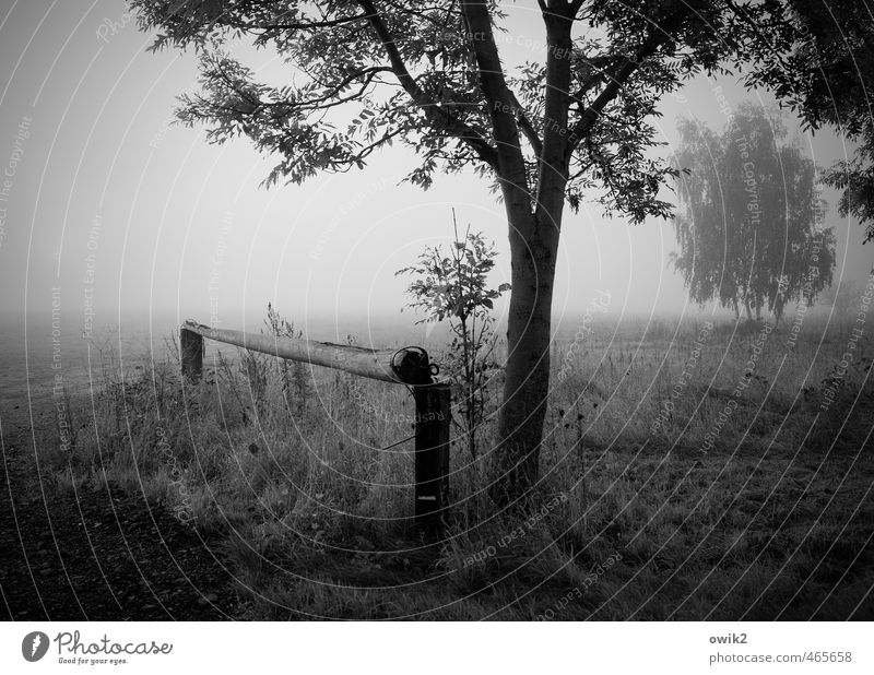 Smog Umwelt Natur Landschaft Pflanze Horizont Herbst Schönes Wetter Nebel Baum Sträucher Zweige u. Äste Feld Holz Wachstum ruhig Traurigkeit Idylle stagnierend