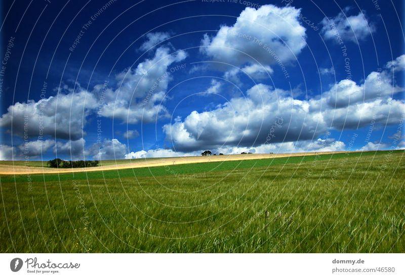 windows xp ? Fenster stark Sommer grün Wolken Würzburg Höchberg Wiese Feld Baum Pol- Filter Farbe Sonne blau Amerika mehrere Kurve