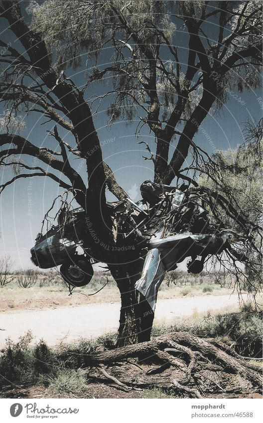 Autocrash Baum Unfall Outback Schrott Australien Beule Kratzer Sommer Physik Verlauf Gras Verkehr PKW car accident Metall Rost Himmel Lack Wärme Sonne Straße