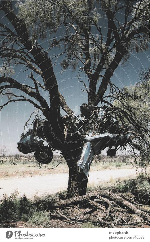 Autocrash Himmel Baum Sonne Sommer Straße Gras Wege & Pfade PKW Wärme Metall Verkehr Wüste Physik Rost Australien Unfall