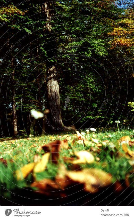 deciduous tree Baum Herbst Natur