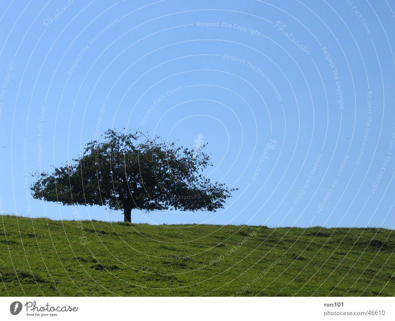 TREE Baum Wiese Feld grün Blatt ruhig tree Himmel blau Baumstamm