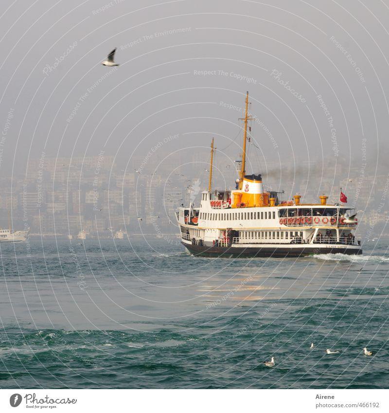 Wo geht's nach Europa? Ferien & Urlaub & Reisen blau weiß Meer Tier Bewegung Vogel orange Wellen Nebel Tourismus ästhetisch Güterverkehr & Logistik Schifffahrt
