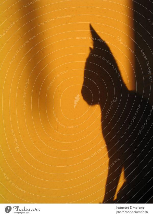 Schattenkatze Katze Licht gelb schwarz