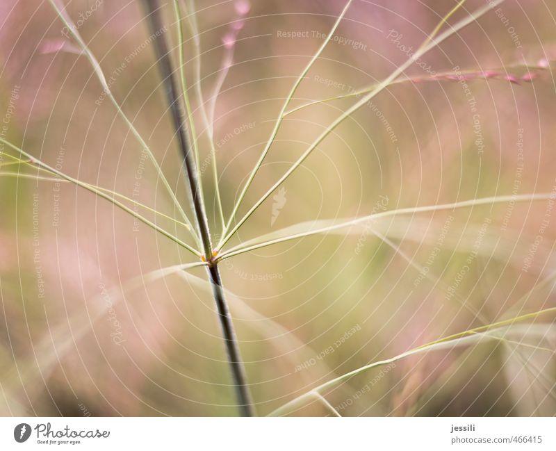 abzweigen Natur grün Pflanze Wiese Gras Garten Linie rosa Park nass Wassertropfen planen Kreativität dünn zart Tau
