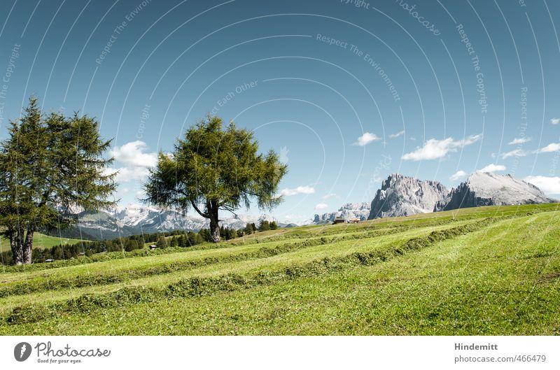 Zwei Europäische Lärchen Ferien & Urlaub & Reisen Tourismus Sommerurlaub Umwelt Natur Himmel Wolken Schönes Wetter Baum Gras Wiese Hügel Felsen Alpen