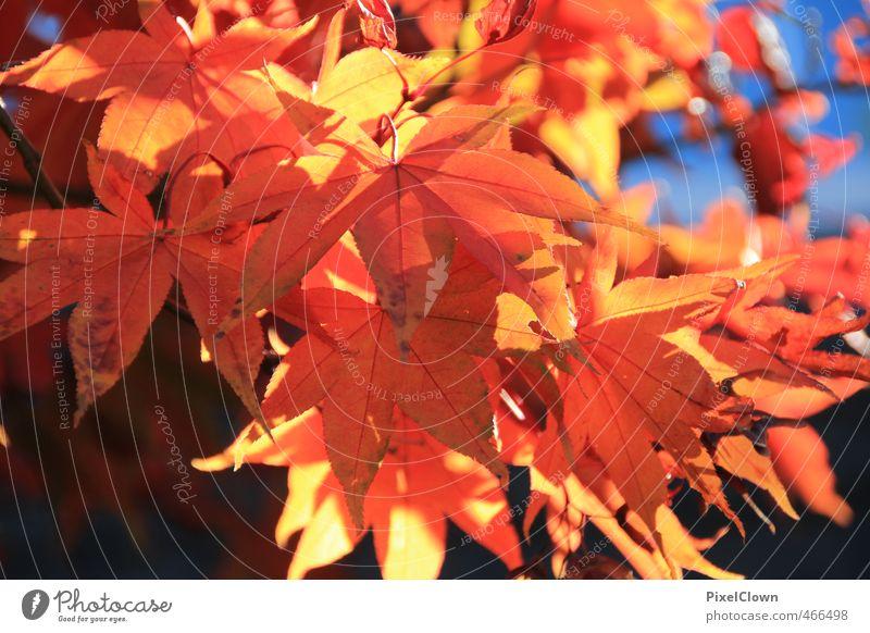 Herbstanfang Ferien & Urlaub & Reisen schön Pflanze Farbe Baum rot Tier Blatt Wald Wärme Stil träumen braun Park orange