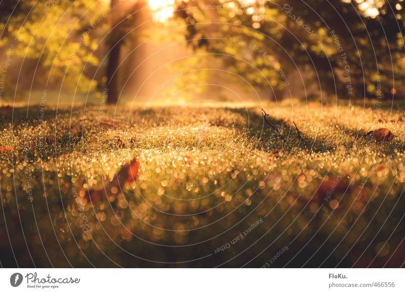sternenstaub im high-end nebel Umwelt Natur Pflanze Erde Wassertropfen Sonnenaufgang Sonnenuntergang Sonnenlicht Sommer Herbst Schönes Wetter Nebel Gras Blatt