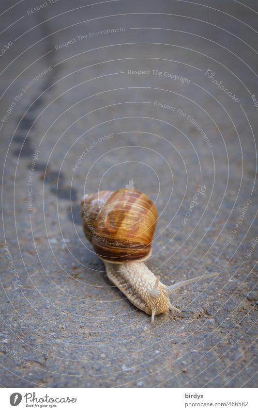 Fährtenlesen für Anfänger schön Tier Straße Bewegung authentisch Geschwindigkeit Ziel Spuren Gelassenheit positiv Schnecke krabbeln Ausdauer geduldig