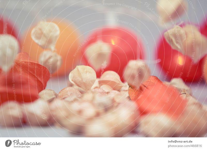 Herbstlich Pflanze rot Herbst Lebensmittel orange Frucht Ernährung Schnur Bioprodukte Schweben herbstlich Vegetarische Ernährung Physalis