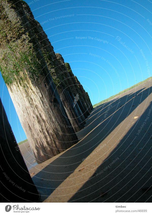 Schattenspiel Meer Buhne Algen Ferien & Urlaub & Reisen Ereignisse Baum Holz Luft Wellen Erholung braun Verlauf Sand blau Himmel Freude Baumstamm Natur Wind