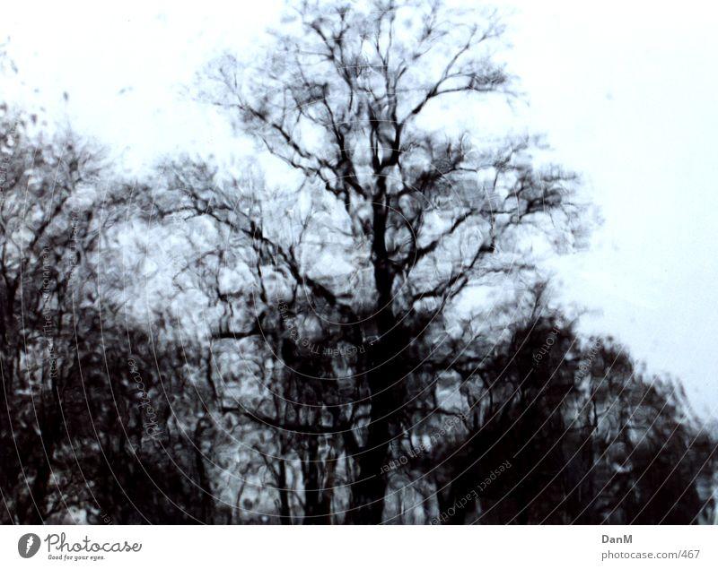 regen Baum Autofenster Regen