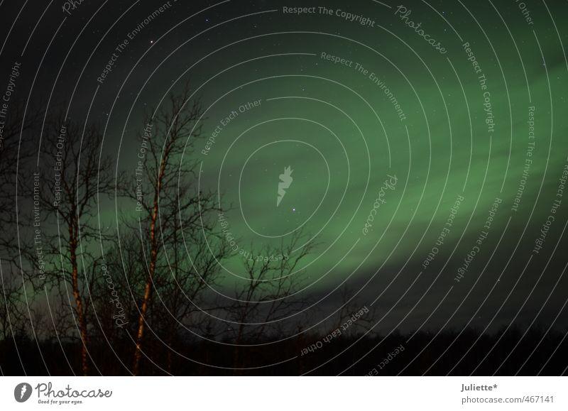 Polarlicht in Norwegen Himmel Natur schön grün Baum Landschaft schwarz Winter Sträucher Schönes Wetter Stern fantastisch Nachthimmel Nordlicht herzbewegend Polarkreis