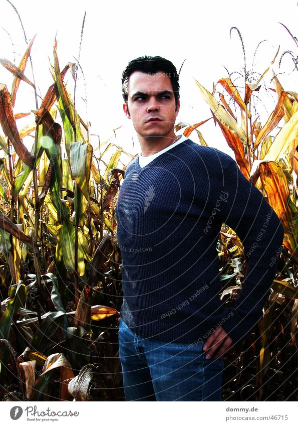 wenn der Bauer kommt Mann Auge Haare & Frisuren Mund Feld Nase T-Shirt stehen Ohr Landwirt Pullover böse Mais Getreide grimmig bedeuten
