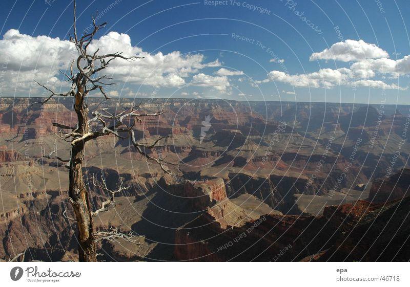 Grand Canyon Baum Ferien & Urlaub & Reisen Ferne Freiheit Landschaft USA Schlucht Nationalpark Nevada Grand Canyon